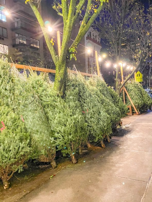 Christmas in NYC: Tree farm in Murray Hill