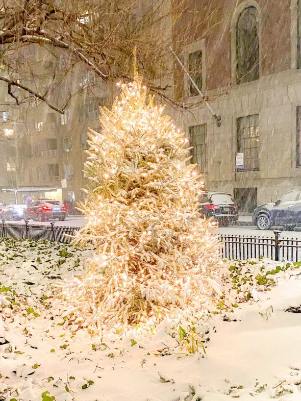 Christmas in NYC: Park Ave Christmas tree covered in snow